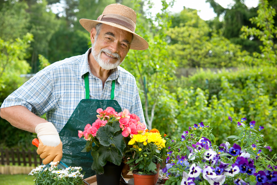 Senior man gardening and holding potted flowers
